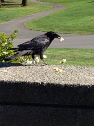 Thinking Crow 3