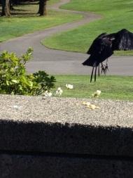 Thinking Crow 4