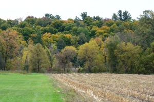 Backdrop for Fall Colours 10K 2015